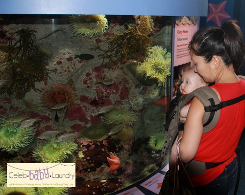 Family Fun: A Trip To The Monterey Bay Aquarium