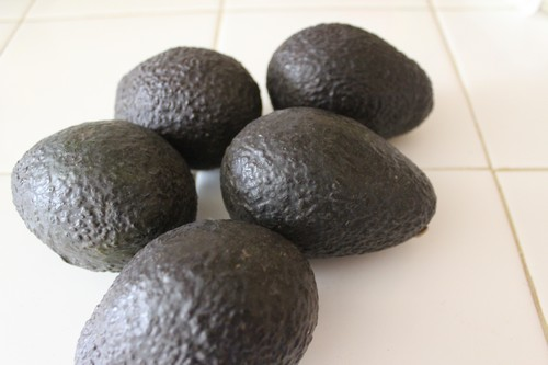 Baby Food: Avocado Adventures