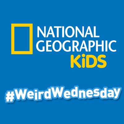Celebrating All That is Weird and Wonderful in the World #WeirdWednesday