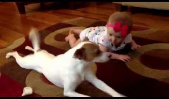 Dog Teaches Baby to Crawl in Adorable Home Video