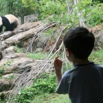 Tips for Visiting the Zoo with Toddlers