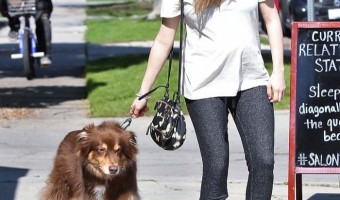 Pregnant Amanda Seyfried Spends the Day With her Dog